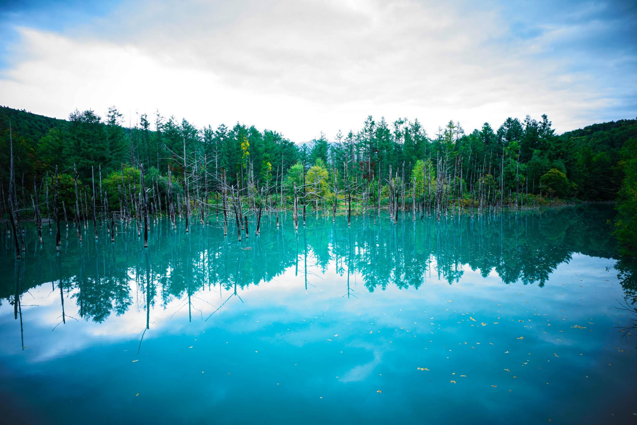 北海道 / Day2 / 美瑛町 青い池 → 白ひげの滝 → 星野リゾート トマム → 水の教会